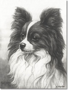 Nina Scott Langley - Hutchinsons Book Of The Dog - Nina Scott-Langley - Papillon Painting