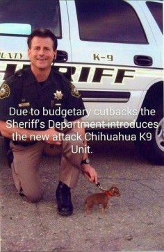 Omg I love this!!! Officer Chihuahua Bad Ass! #chihuahuadaily #teacupdogs #teacupchihuahua