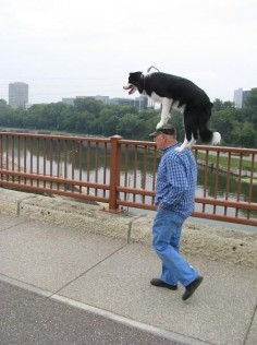 Only a border collie!