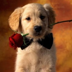 Or maybe because they're so  | Community Post: 28 Pictures Of Golden Retriever Puppies That Will Brighten Your Day