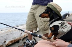 Paddles, Picks, & Fish – Camping Part 1 – Crusoe the Celebrity Dachshund