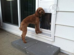 Patio Pet Door Inserts are Convenient for You and Your Pet! Widest Selection on the Market, Call to Speak with an Pet Door Expert 7 Day a Week! 800-829-7876 #Convenient