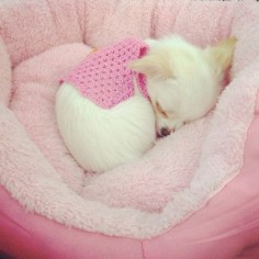 Peacefully sleeping puppy #Pink