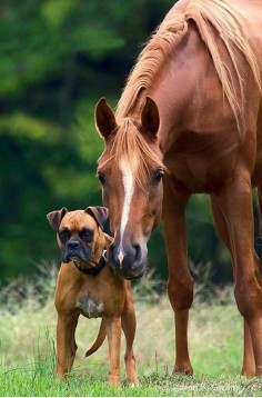 #Pferd #hund