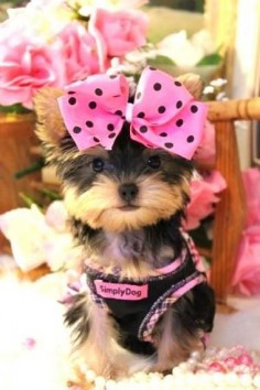 Pink Bow Puppy
