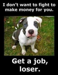 Pit Bull Get a Job