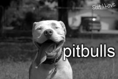 Pitbull love. Best smile in the world