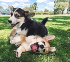 Playful little goobers.