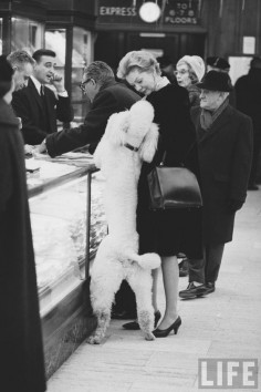 poodle helping with the shopping!