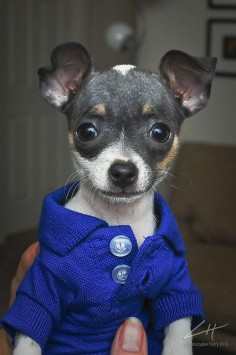 preppy puppy. how cute