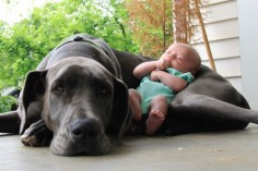 protecting his baby!!! dogs and cats do not harm children, they immediately sense this is their 'child' to protect!! There might also be more compassion thru out world if kids were introduced to house pets very early in life and learned how to love and care for them.