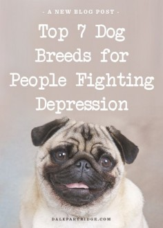 Pugs are #2, I don't have depression but I could always use the mood booster ♥