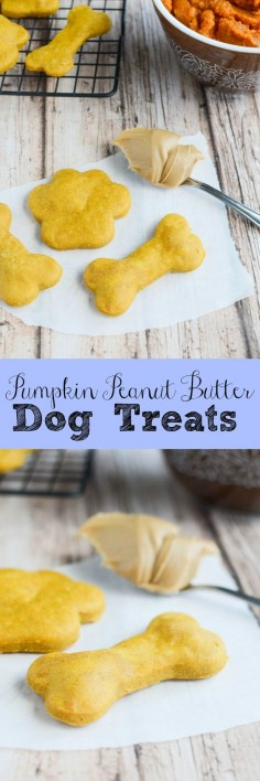 Pumpkin Peanut Butter Dog Treats - your pups will love these homemade dog treats!