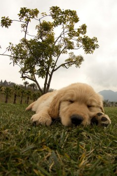 Puppy nap time in the park❤️☺️