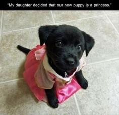 Puppy princess