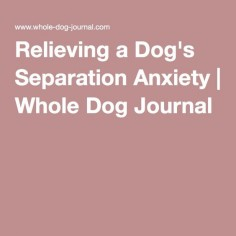 Relieving a Dog's Separation Anxiety | Whole Dog Journal