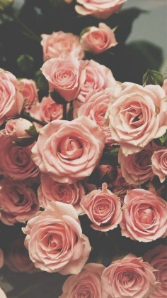 Roses ★ Find more vintage wallpapers for your #iPhone + #Android @iPhone Wallpapers