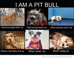 Say NO to BSL