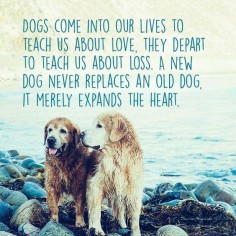 Says it all! I need this framed on the wall. Dogs are some of the best blessings we'll eve know in this