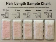 Shave Blade Sample Chart for Grooming by KreationsByKohler on Etsy