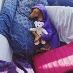 She's even stylish in her sleep!   This Canadian Dog Is Better Dressed Than Anyone In Canada, TBH