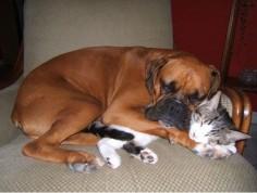 Snuggle buddies!
