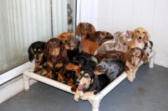 SO many doxies!