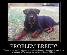 So true! Rottweilers are gentle giants!