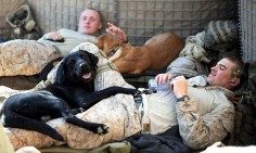Soldiers and their military dogs #dog #puppy #pet #animal #dogLovers #soldiers #war #militaryDogs #serviceDogs #militaryService #patriot #USNavy #USArmy #USAirForce #USMarineCorp #Veterans #Labrador #BlackLab