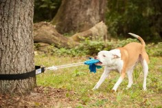 Super Tug - Strong Dog Toy - Safe Alternative to Spring Pole or Rope on Etsy, $