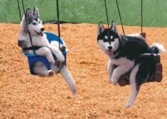 Suspended huskies!