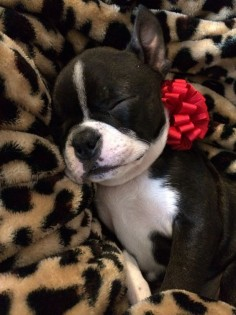 Sweet sleepy baby boston