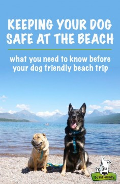 Take these things into consideration before you go to the beach with your dog.