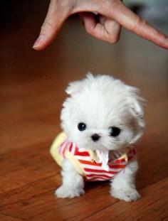 Teeny Tiny Pom Baby