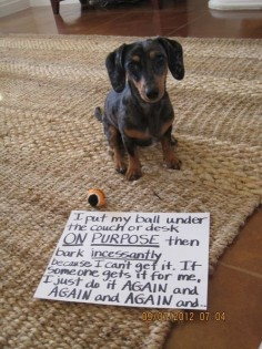 That's just being a wiener dog.