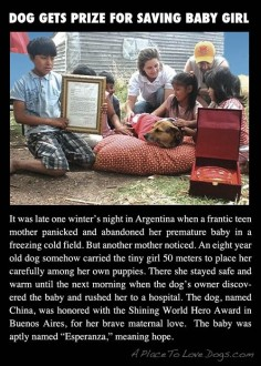That's One Special Dog - A Place to Love Dogs