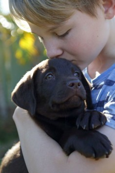 The 16 Best Things About Owning A Labrador Retriever!
