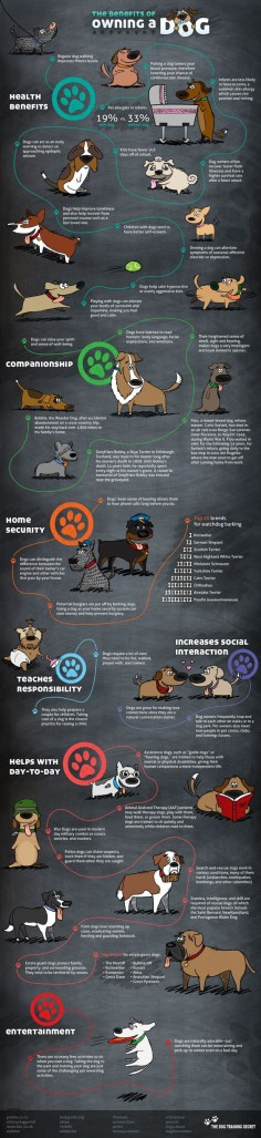 The Benefits of Owning a Dog