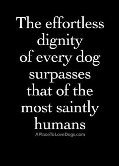The effortless dignity of every dog surpasses that of the most saintly humans. #dog #quotes