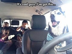the-funny-animals-73