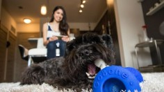The GoBone keeps your dog active while you're away and opens up a whole new world of play when you're together.