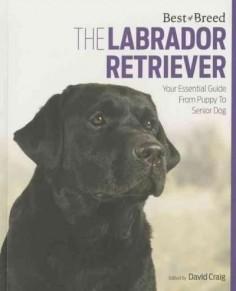 The Labrador Retriever: Your Essential Guide from Puppy to Senior Dog