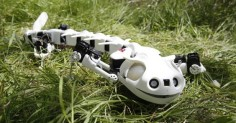 "The mad roboticists at the École Polytechnique Fédérale de Lausanne have produced another biomimetic mechanoid — this one based on the lithe locomotion of the salamander. ""Pleurobot"" imitates the amphibian's ambulation with its own articulated vertebrae, allowing it to slither along on land or at sea."