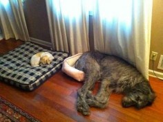 These dogs switched beds.