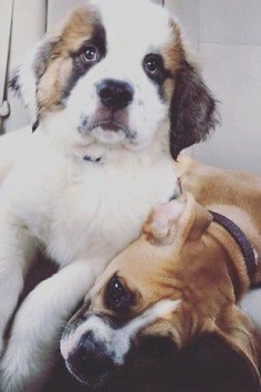 These puppy best friends. 19 Dogs Who Will Make Literally Anyone Happy