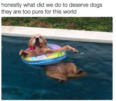 They are pure and innocent and everything good. | 22 Things You'll Just Get If You Love Animals More Than People