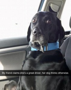 This car ride was a mistake (& other dog regrets)