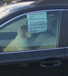 This dog, for whom we are all happy.
