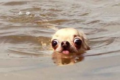 This dog who's fleeing the jaws of certain death.