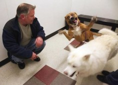 This guy who was pretty happy to finally be adopted. | 19 Dogs Who Will Make Literally Anyone Happy